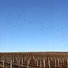 ~ Birds'n'Vines by LeeoPhotography