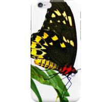 Butterfly Garden  iPhone Case/Skin