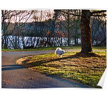 Sylvie In the Park At Dusk Poster