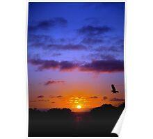 Cockatoo Sunset Poster
