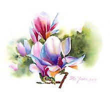 Vibrant Magnolia  Photographic Print