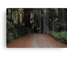 Road in the giants Canvas Print