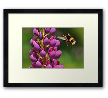 Coming in to land ~ Framed Print