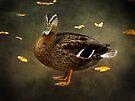 Autumn Duck by Carol Bleasdale