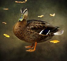 Autumn Duck by Carol Bleasdale