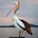 Pelican by Michael Howard