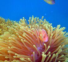 Anemone Forrest  by tracyleephoto