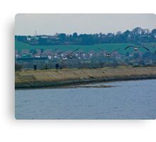 Brent geese approaching Canvas Print