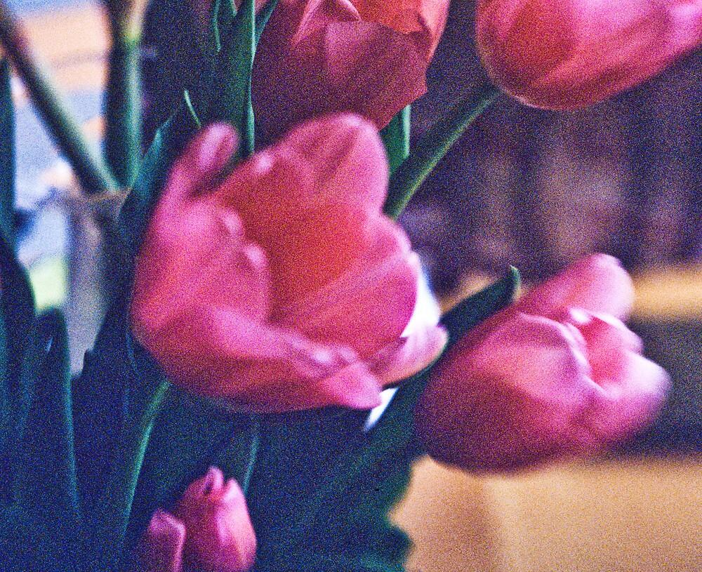 Tulips by Paul mac Cionnaith