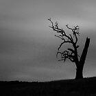 Tree in Lysterfield, VIC by Andrejs Jaudzems