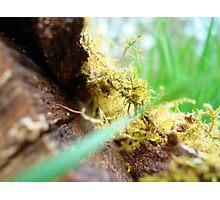 wet grass:L Photographic Print