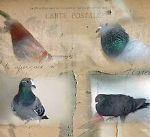 Pigeon Postcard - Love for Pigeons by Maree  Clarkson