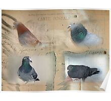Pigeon Postcard - Love for Pigeons Poster