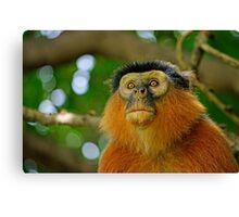 Monkey See Monkey Do Canvas Print