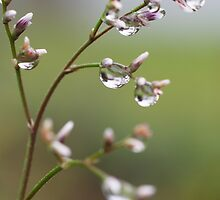 Drops in the Nature by Aviana