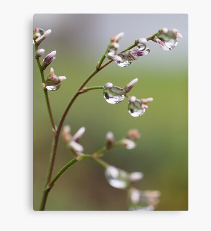 Drops in the Nature Canvas Print