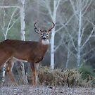 Buck In The Mist by Bill Maynard