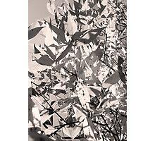 11_15_11_10_52 Photographic Print
