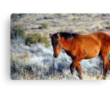 Wild Horses in Nevada #2 Canvas Print