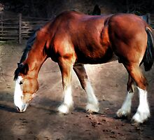 Young Clydesdale by Elaine  Manley