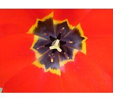 Poppy Tulip Photographic Print