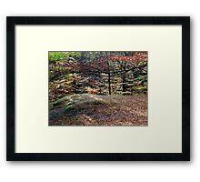 Autumn Shade  Framed Print