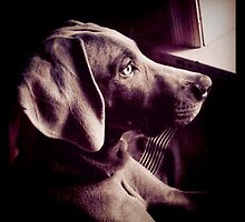 Dog peering out the window by 1grayweim