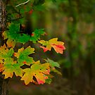 Change to Autumn  by Janice Carter