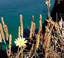 Flowers on a Cliff Edge by bertie01