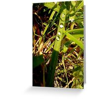 Water droplets on long grass Greeting Card