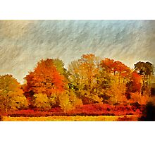 A Wiltshire wood, Autumn 2011 Photographic Print