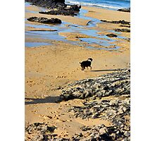 wet dog Photographic Print