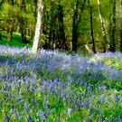 Bluebell Blur by Ann Garrett