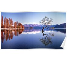 Sunrise at that Wanaka Tree Poster