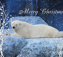 Polar Bear Christmas by Elaine  Manley