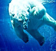 Polar Bear-1 by ScaredylionFoto