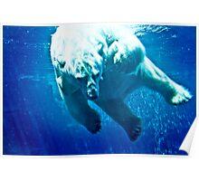 Polar Bear-1 Poster
