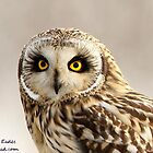 Short eared owl  by Dean   Eades