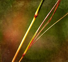 Grass stems with texture by Kate Fortune