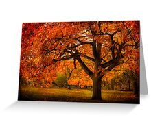 Red Oak Tree Greeting Card