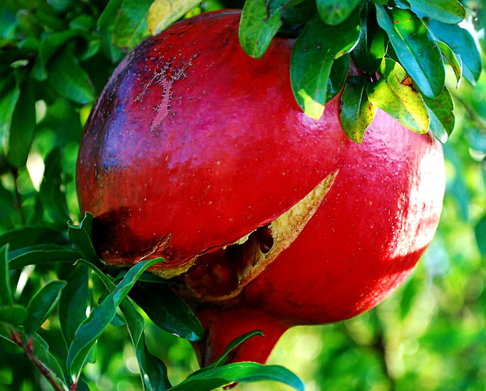 Pomegranate by Kate Fortune