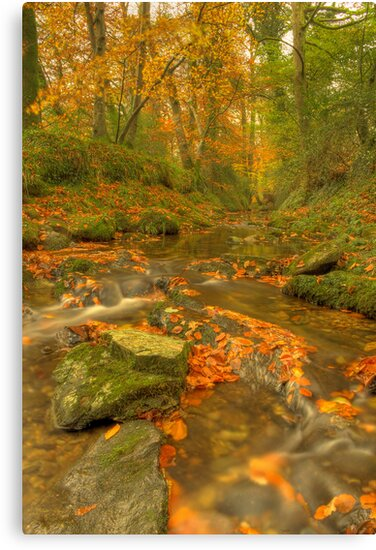 Autumn's Fire burns slowly... by phil hemsley