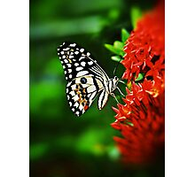 Beautiful Butterfly on Red Flowers Photographic Print