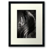 Peaceful Slither Framed Print