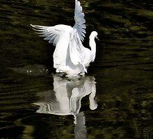 Reflections of Beauty  by Saija  Lehtonen