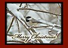 Christmas Card - Chickadee in Snow by MotherNature