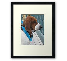 Shango with his new bandana Framed Print