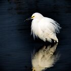 Snowy Egret  by Saija  Lehtonen
