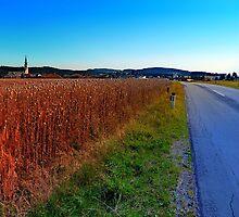 Poppy field road by Patrick Jobst