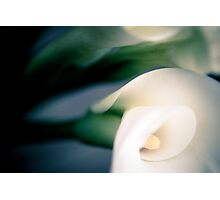 Lily 9 Photographic Print